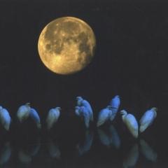 「月見の宴」「月見の宴」