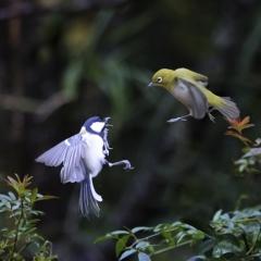 「小鳥の語らい」