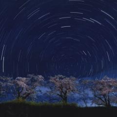 「星を眺める桜」