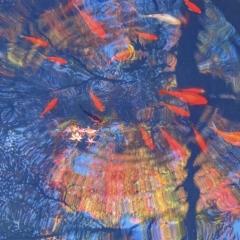 「錦秋を泳ぐ」