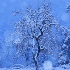 「初冬の彩り」