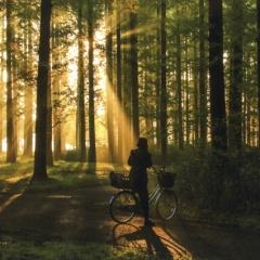 「爽朝」林の光跡と自転車