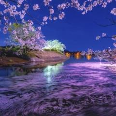 「桜散り渦となる」