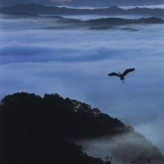 「朝霧に舞う」