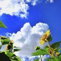 T.NISHIBAYASHI写真展 ヨコハマの風景 2021年9月1日(水)~26日(日)